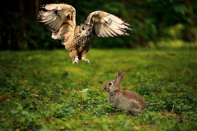 bescherming konijnenren maken